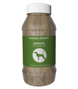 Alfalfa - pot (net 300g)